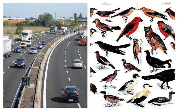 alessandro poletti polettica gestione corsie autostrada automobilista italiano lunghezza uccelli